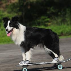 Udendørs skridsikre hundesko