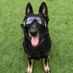 Hund gennemsigtige briller vandtæt vindtæt
